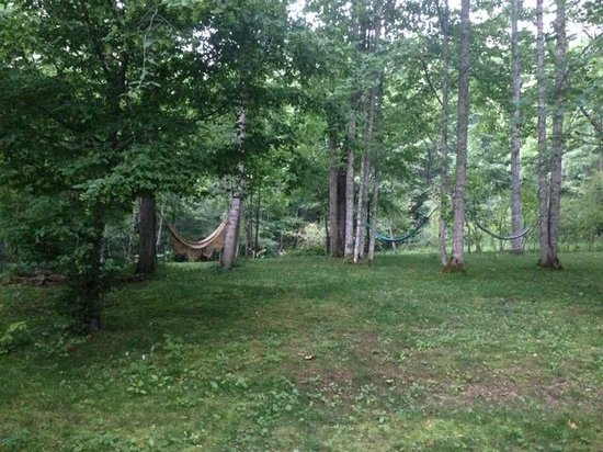 Mountain Light Sanctuary: Hammocks among the birch trees and moss