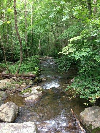 Mountain Light Sanctuary: Creek
