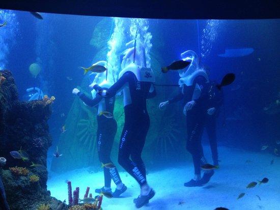 ... good colours - Picture of Sea Life Manchester, Trafford - TripAdvisor