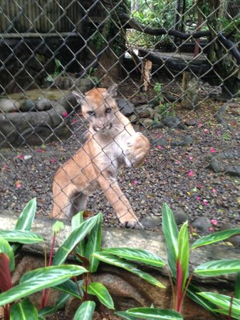 The Springs Resort and Spa: Simba - lives in the wildlife preserve on the grounds