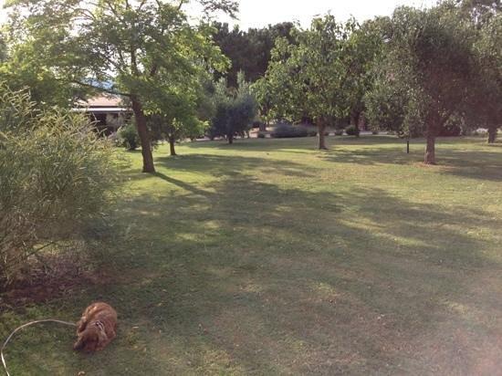Agriturismo Fusini: veduta del giardino