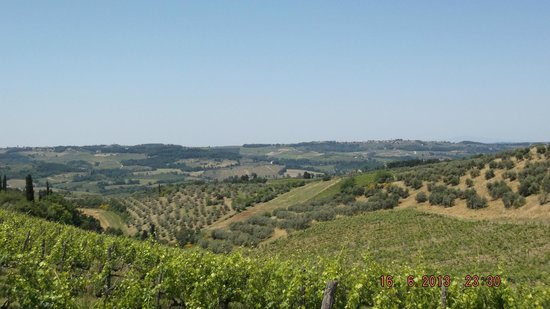 Horses and Vineyards : view of the valley
