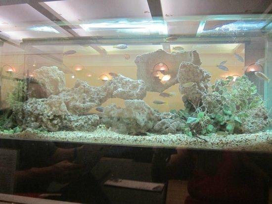 fish tank - Picture of Seizan, Perth - TripAdvisor