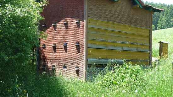 Allgauer Bergbauernmuseum: Imkerei