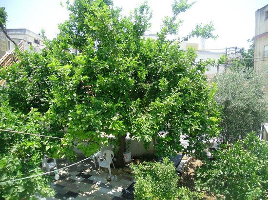 ‪‪Cana Wedding Guest House‬: a faimose lemon tree in cana guest garden‬