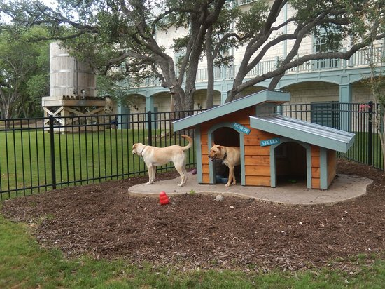 Hyatt Regency Hill Country Resort and Spa: Shelter dogs they adopted.