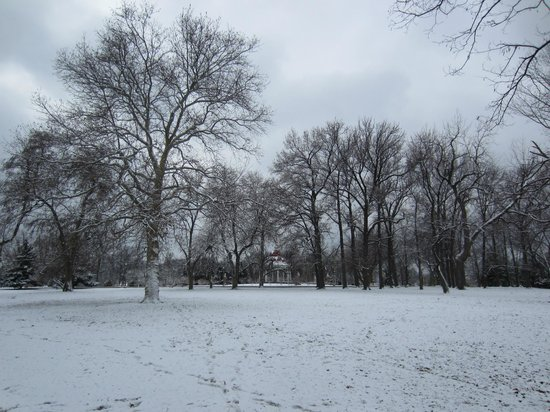 Tower Grove Park: trees in winter
