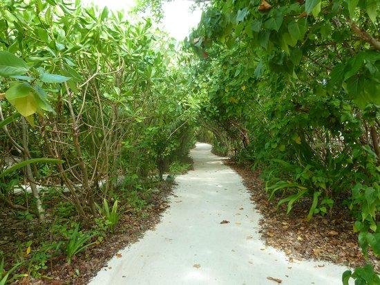 Coco Bodu Hithi: Durchgang Insel