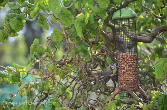 Sallyport House : Breakfast birdfeeders