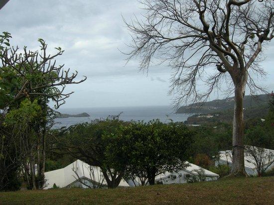 Le Jardin Tropical : Vue de la terrasse