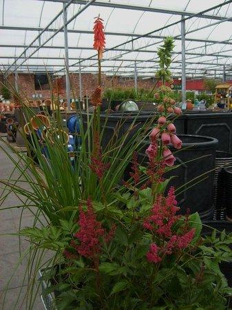 Barton Grange Garden Centre - Workshops: Great plants for sale ..
