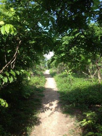 Harmony Hotel Nosara: path to beach
