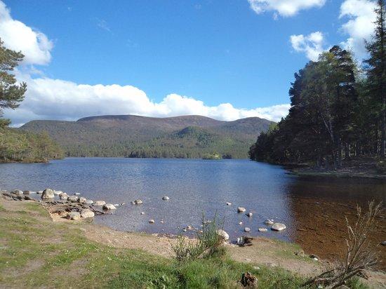 Loch an Eilein: Stunning!