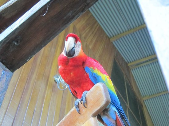 Monte Amazonico Lodge : One of the macaws