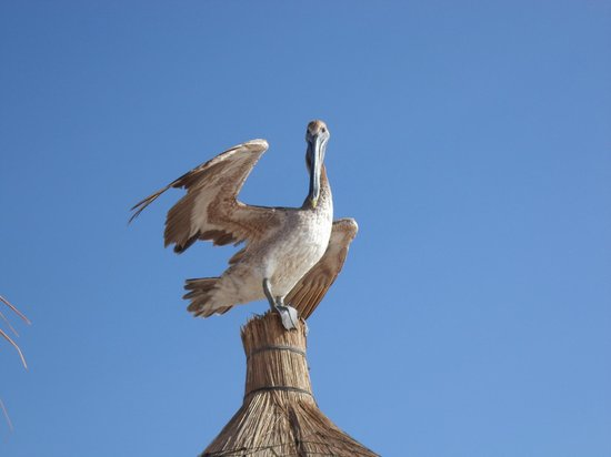 Luxury Bahia Principe Sian Ka'an Don Pablo Collection: My new friend on top of my palapa