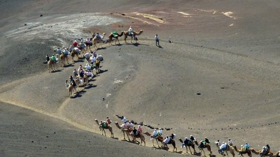 Blackstone Treks & Tours: Camels riden by tourists (but why?)