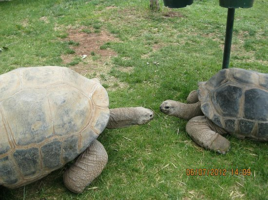 Two old brothers @ Reptile Gardens - Picture of Reptile Gardens ...