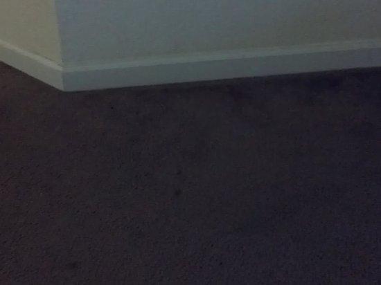 Palisades Resort: dirty carpet