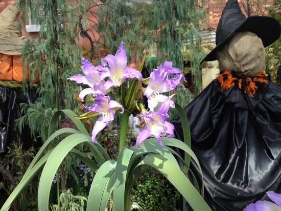 Denpark: 温室の中で咲く.珍しい欄の花