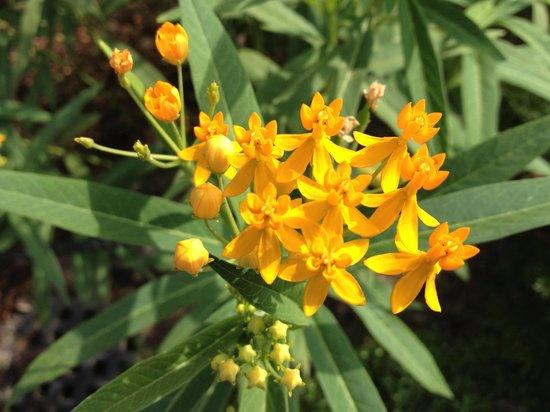 Denpark: この花も初めて見ました.珍しい花がたくさんあります