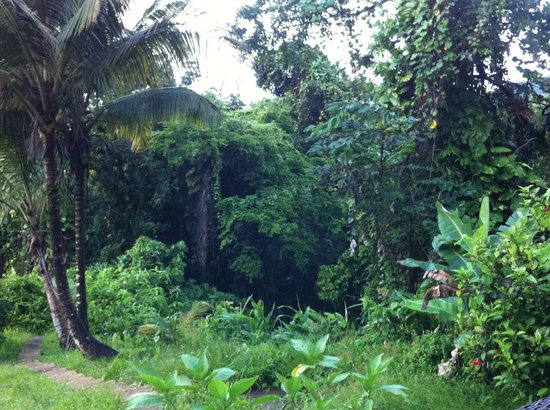 Carole's Rainforest Villas : View from Room