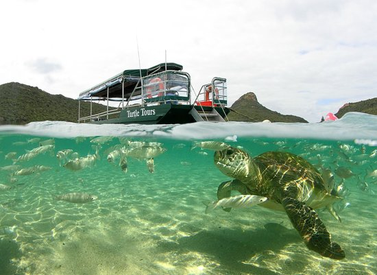 Marine Adventures: Green Turtle Tours Boat