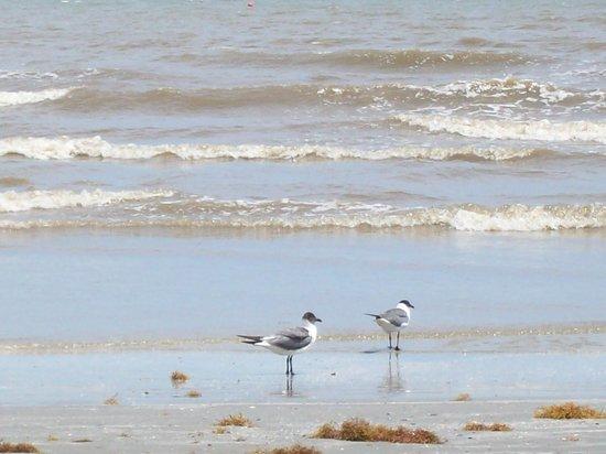 Hampton Inn & Suites Galveston: Galveston Beach