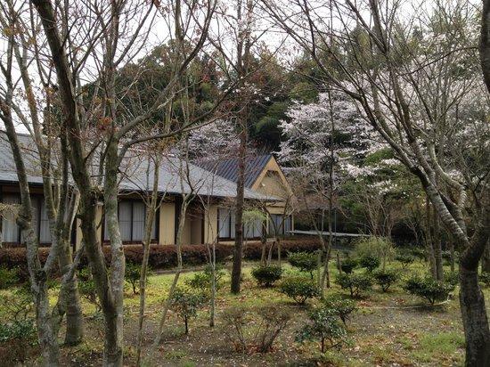 Tokiwaso: 旅館のお庭から