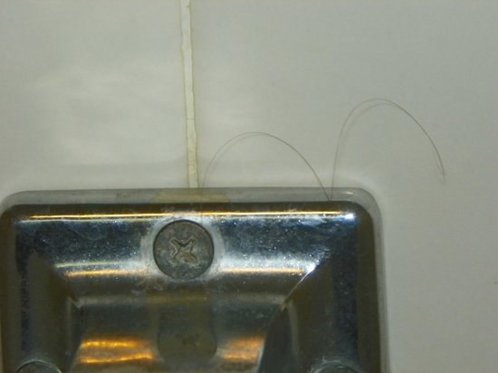Ramada Gainesville: Stray hair on toilet paper holder