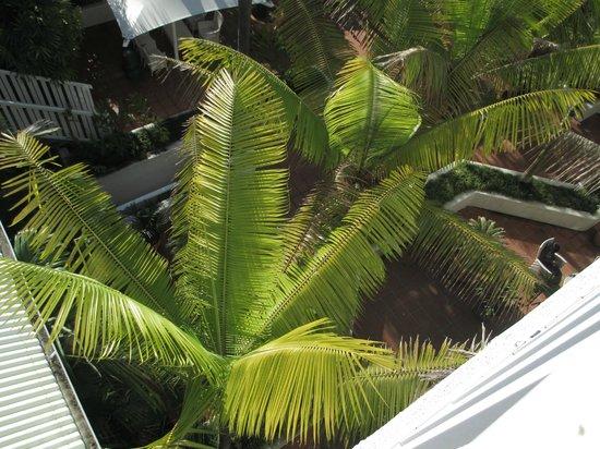 ذا هوتل كارينز: Grounds below our balcony