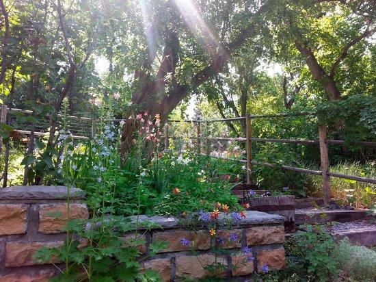 Secret Garden: The garden