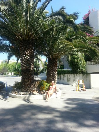 Dessole Lippia Golf Resort : palms