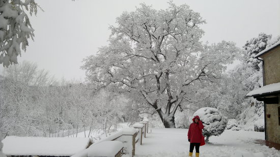 Villa Loghino : oak over 600 years old