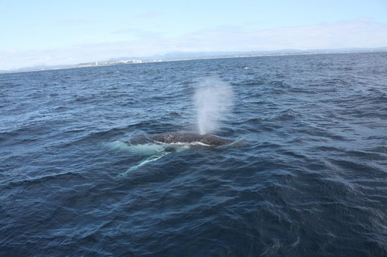 Coolangatta Whale Watch: Close encounters with humpbacks!