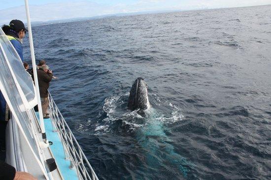 Coolangatta Whale Watch: Mugged by a humpback!