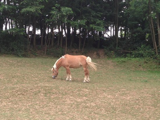 Agricola Brusignone : un cavallo bellissimo