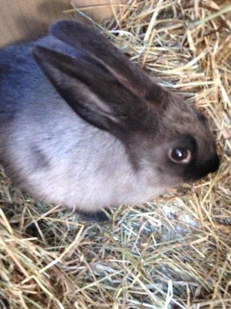 Torridge House Cottages: Our new rabbit