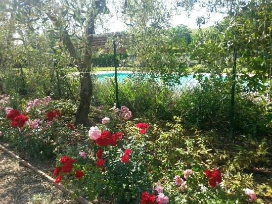 Borgo Piccaratico: Giardino