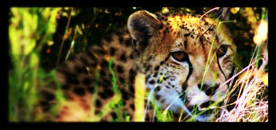 The Baroness Luxury Safari Lodge: leopard