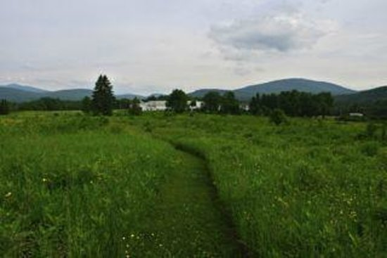 Mountain Village Farm B&B: Take a walk through the meadow