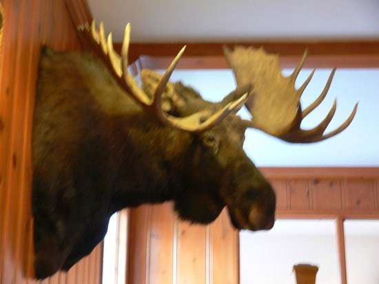 Stage Coach Inn: 'Hunting Trophy' Moose
