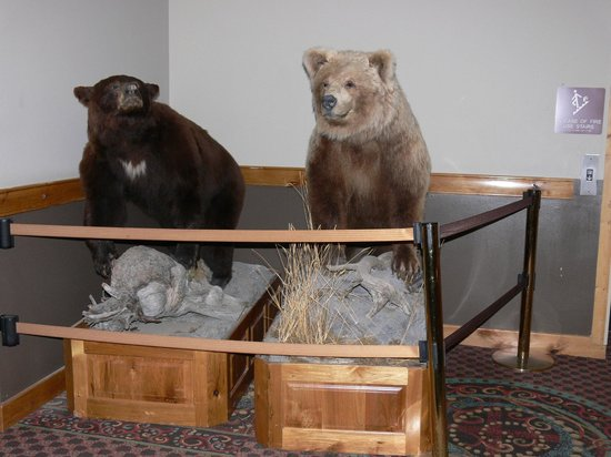 Stage Coach Inn : 'Hunting Trophy' Black bear (left) Grizzly Bear (right)