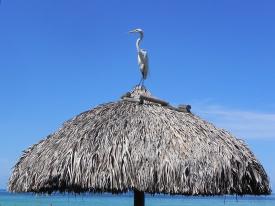 The Diplomat Beach Resort: morning visitor