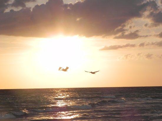 The Diplomat Beach Resort: amazing sunsets