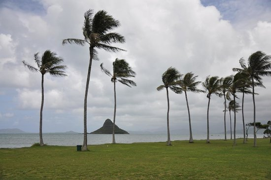 Kualoa Regional Park: Coconut or Palm Trees