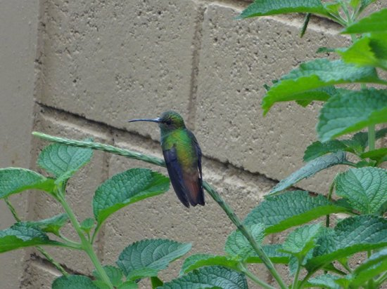 Casa Marin B&B: Hummingbird in the garden