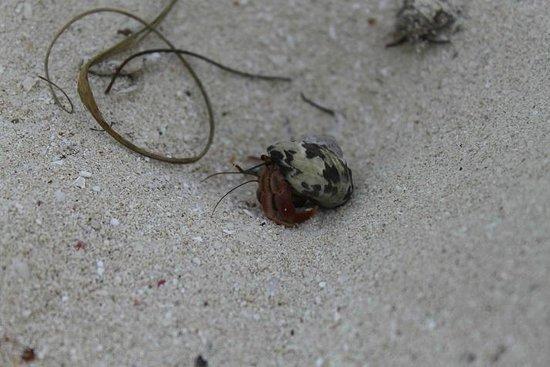 Melia Buenavista: Beach Wildlife