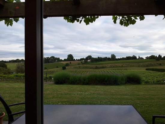 Three Choirs Vineyards: View from the table inside the restaurant.