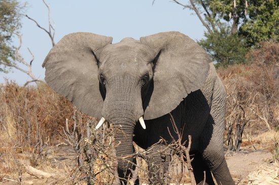 Wilderness Safaris Seba Camp : au plus pres des elephants