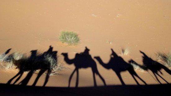 Bivouac les Touareg chez Bachir: mooie schaduw van onze karavaan